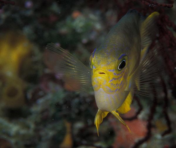Palau  1155 - Marinelife - Keith Ibsen Photography