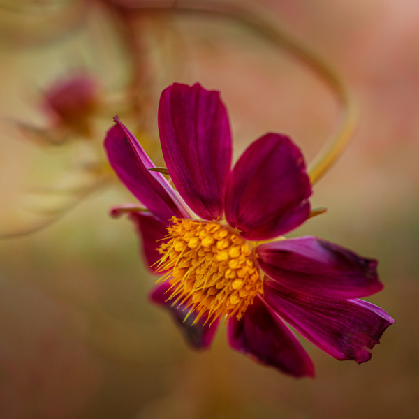red flower square - Home - JaxPropix Photography