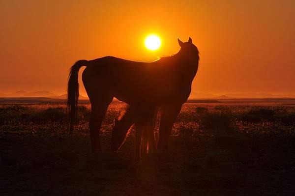 i cavalli selvaggi