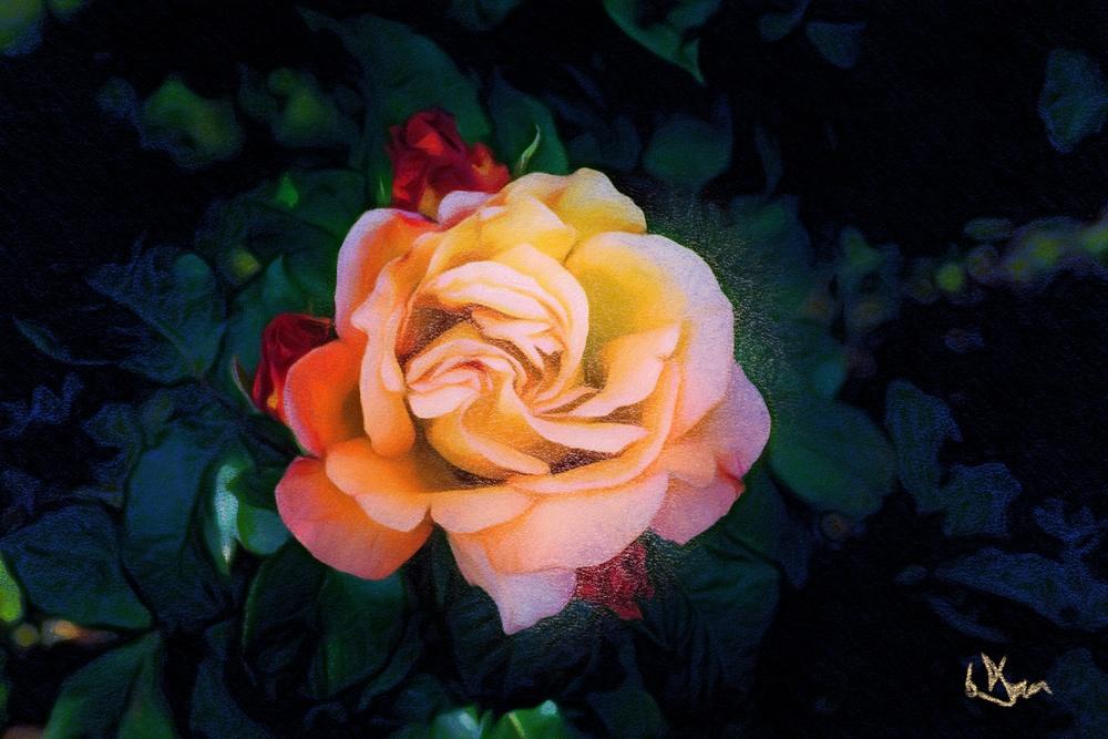 Rose - Pastel