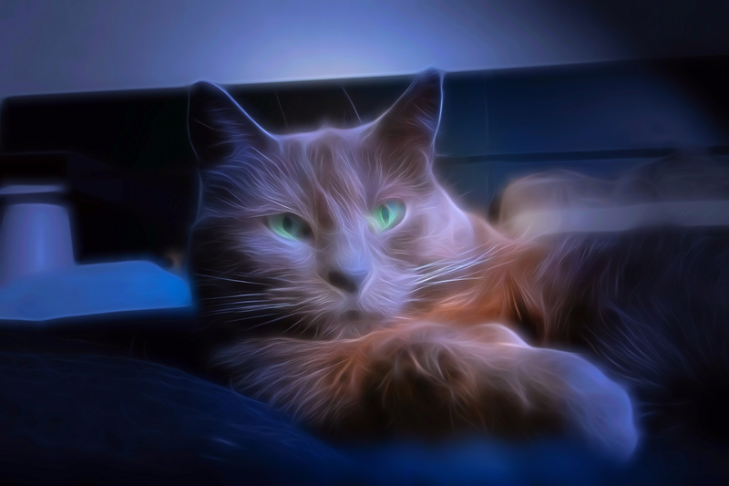 Chat - Effet
