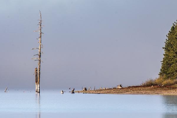 Fog over Hyatt Lake by KeeleysPhotos