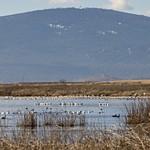 Klamath Basin Trip - Feb-2021