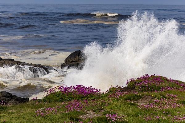 Coast Trip May 2021 by KeeleysPhotos