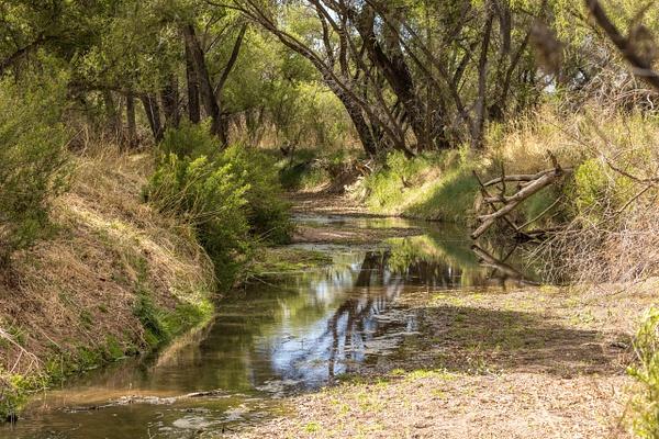 San Pedro River by KeeleysPhotos