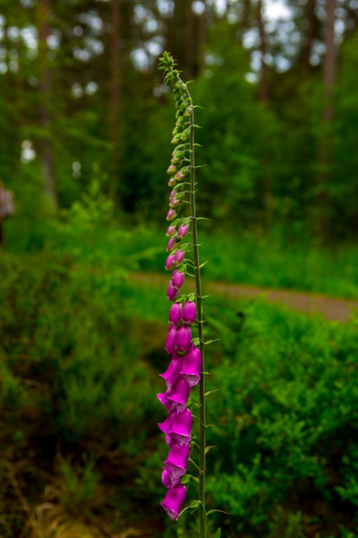 DeVilla Forest (8 of 8) - Macros - Heather Morrison Photography
