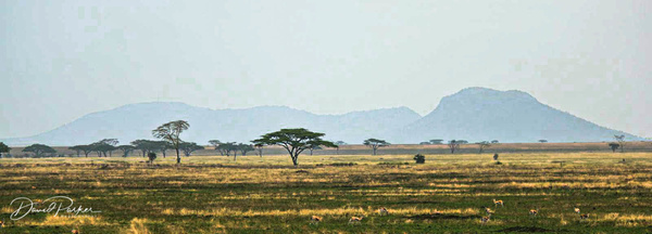 Savannah of the Serengeti by DavidParkerPhotography