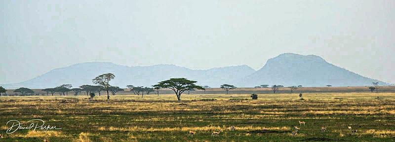 Savannah of the Serengeti