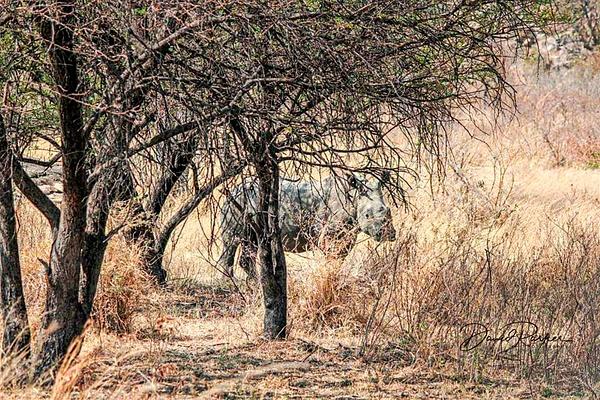 Rhino - Zimbabwe1 by DavidParkerPhotography