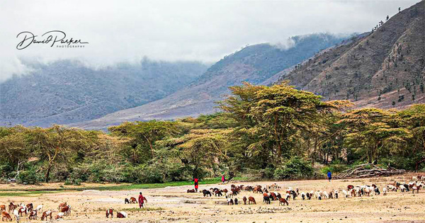 Maasai in the Ngorongoro Crater, Tanzania by...