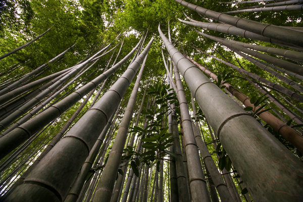 japan-3804 by Phil Steele