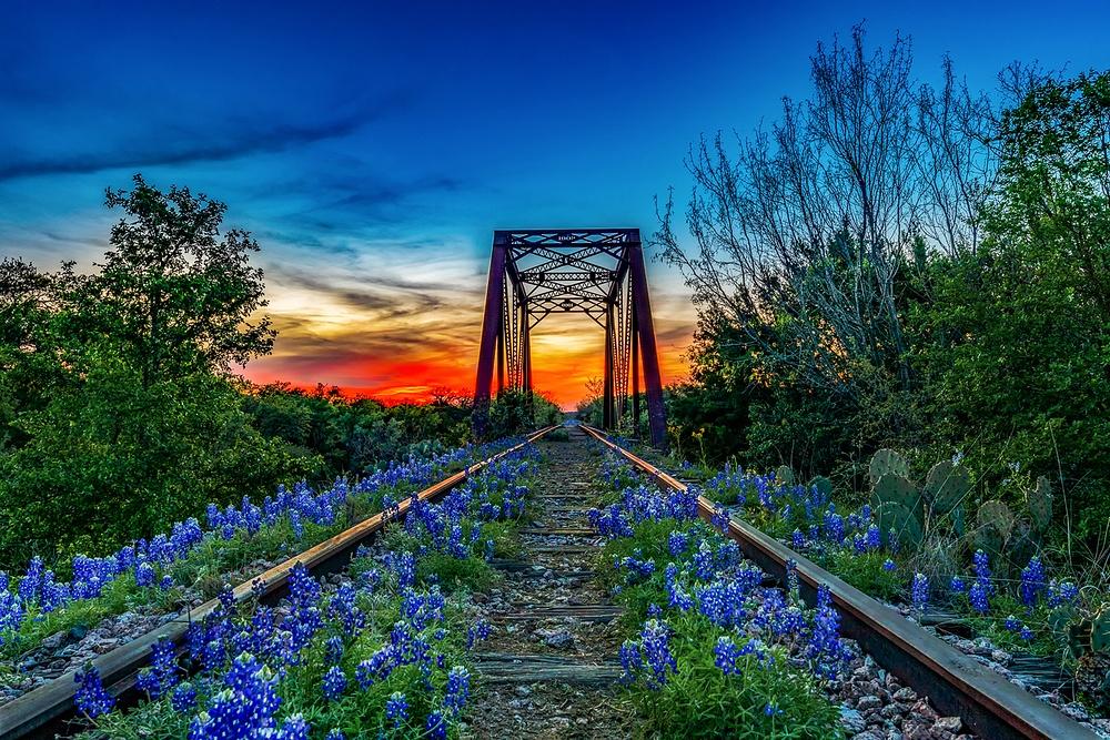 Bluebonnet Trestle Sunset