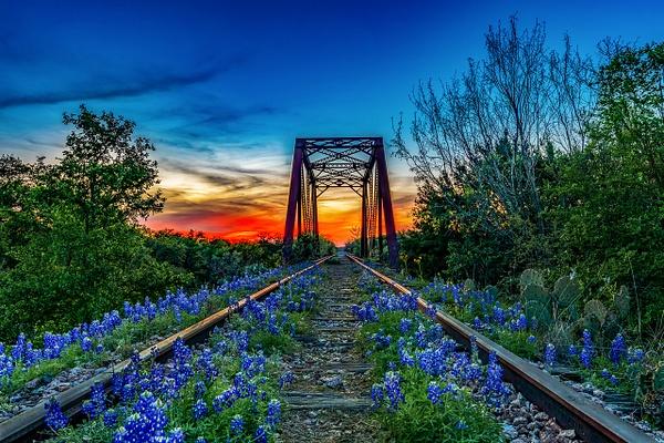 Bluebonnet Trestle Sunset - Texas - John Roberts - Clicking With Nature®