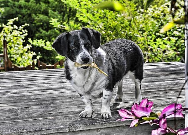 Pets by Frank Kook
