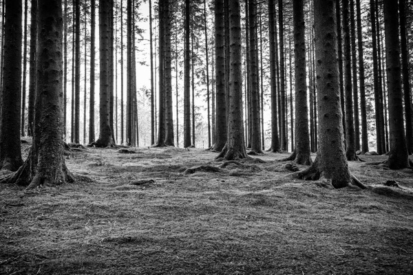 HL-21144-8323-Edit-3 - Home - Hans Lie Photography