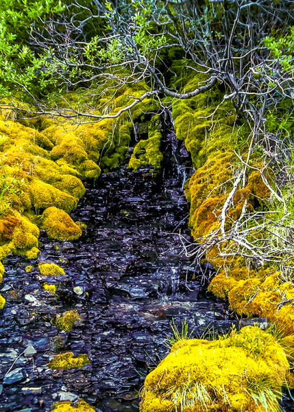 Mossy Brook by BarbaraRothPhotography