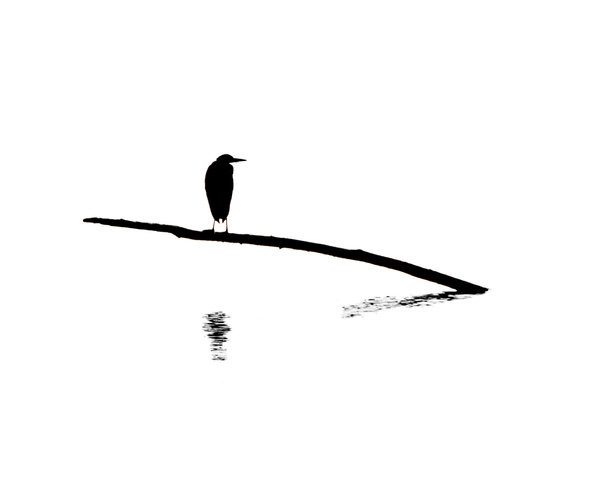Heron on the Water - Minimalism - McKinlayPhoto