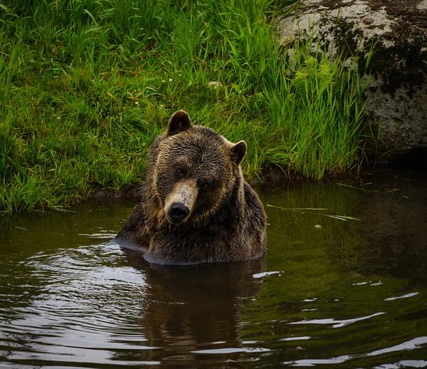 Chillin in the Pond - Wildlife - McKinlay Photos