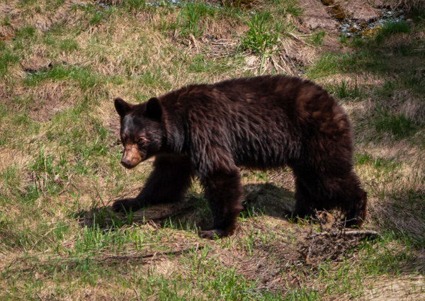My New Friend - Wildlife - McKinlay Photos