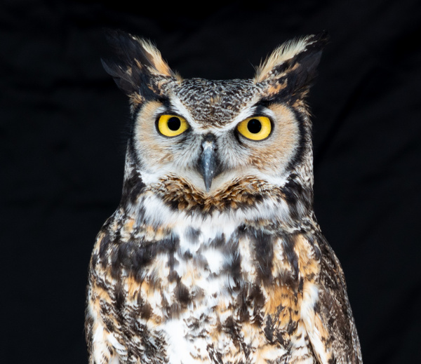Owls-0736 - Wildlife - McKinlay Photos