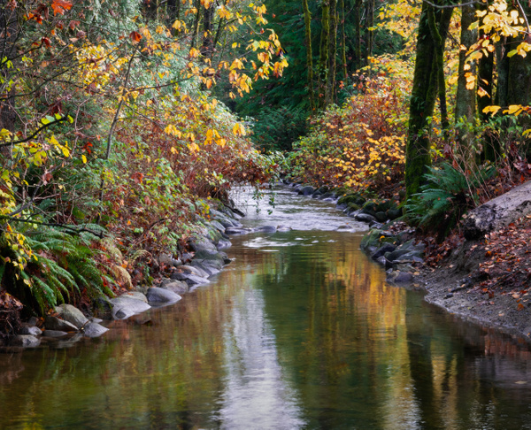 Hyde Creek In Autumn - Streams and Rivers - McKinlay Photo