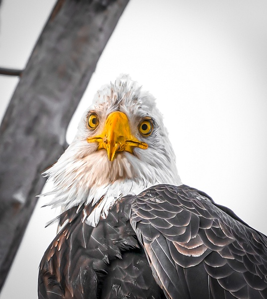 What are you looking at - Wildlife - McKinlay Photos