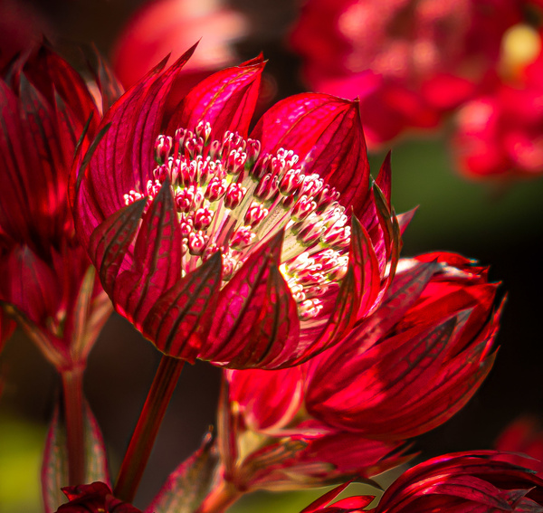 Beauty of a Flower - Plants and Trees - McKinlay Photo
