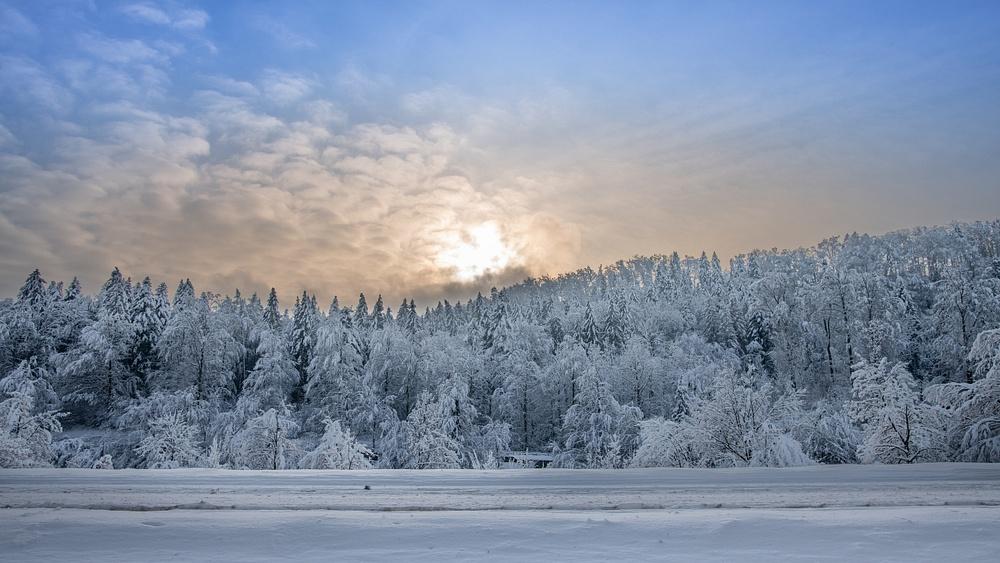 Shilwald im Schnee-3590