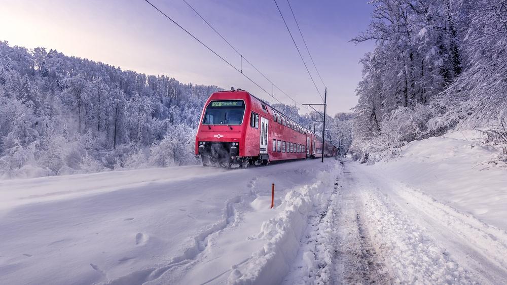 Shilwald im Schnee-3597