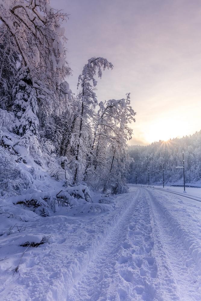 Shilwald im Schnee-3613
