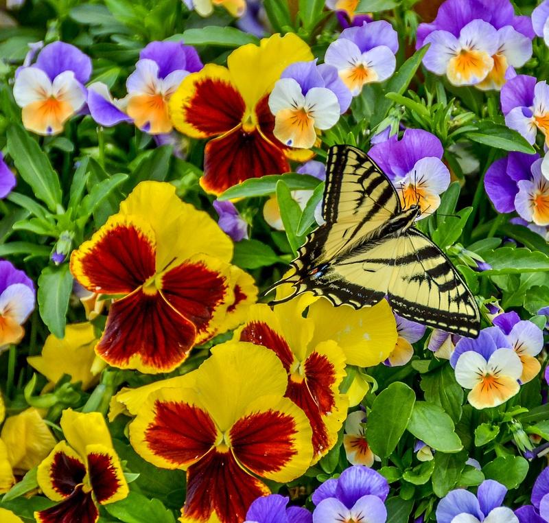 Butterfly in Winthrop