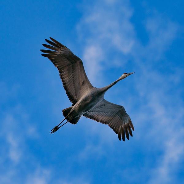 A9-20210123-0120-Edit - AVIAN - Walnut Ridge Photography