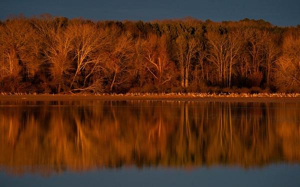 A9-20210123-0356-Edit - AVIAN - Walnut Ridge Photography