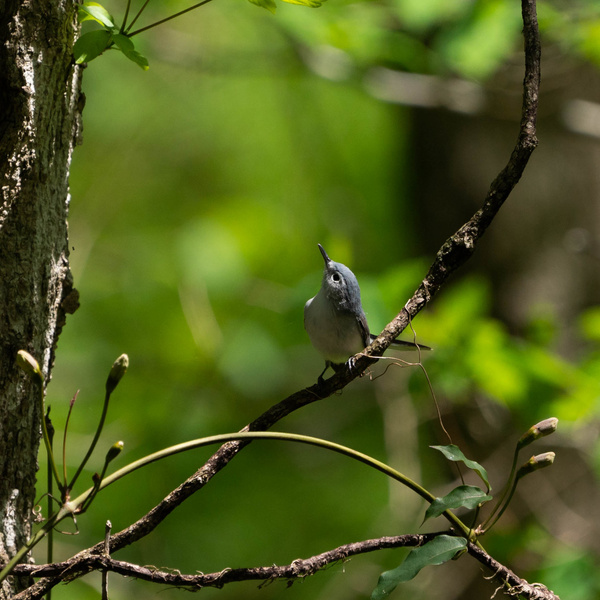 A9-20210412-0027 - AVIAN - Walnut Ridge Photography