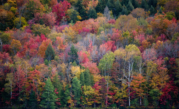 JCW_4961-1 - Landscapes - Jonathan C. Watson