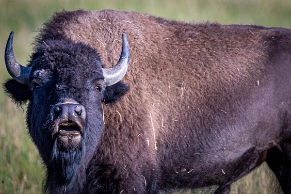 Wildlife Photographer - Wildlife Photography - John Dukes Photography