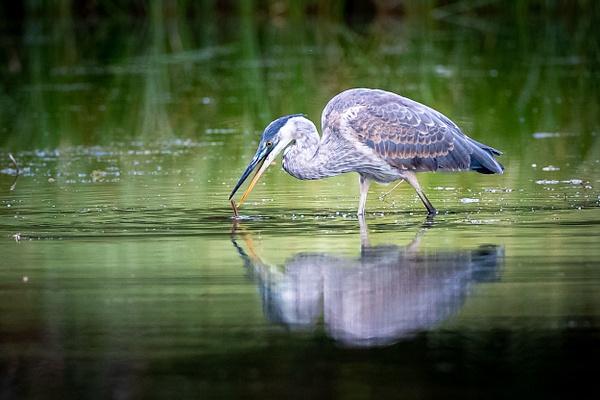 Bird Photographer - Wildlife Photography - John Dukes Photography