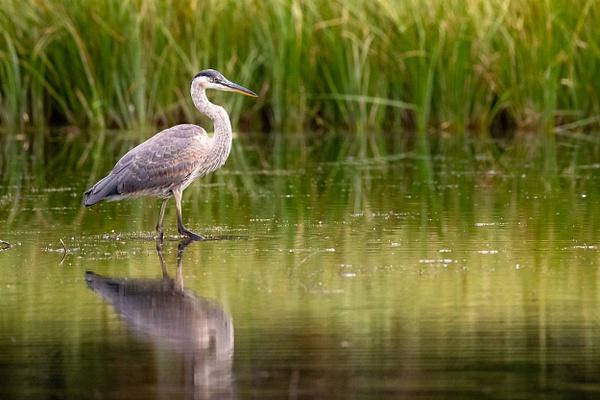 Bird Photography - Wildlife Photography - John Dukes Photography