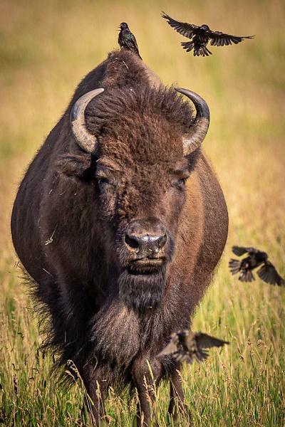 Wildlife Photography - Wildlife Photography - John Dukes Photography
