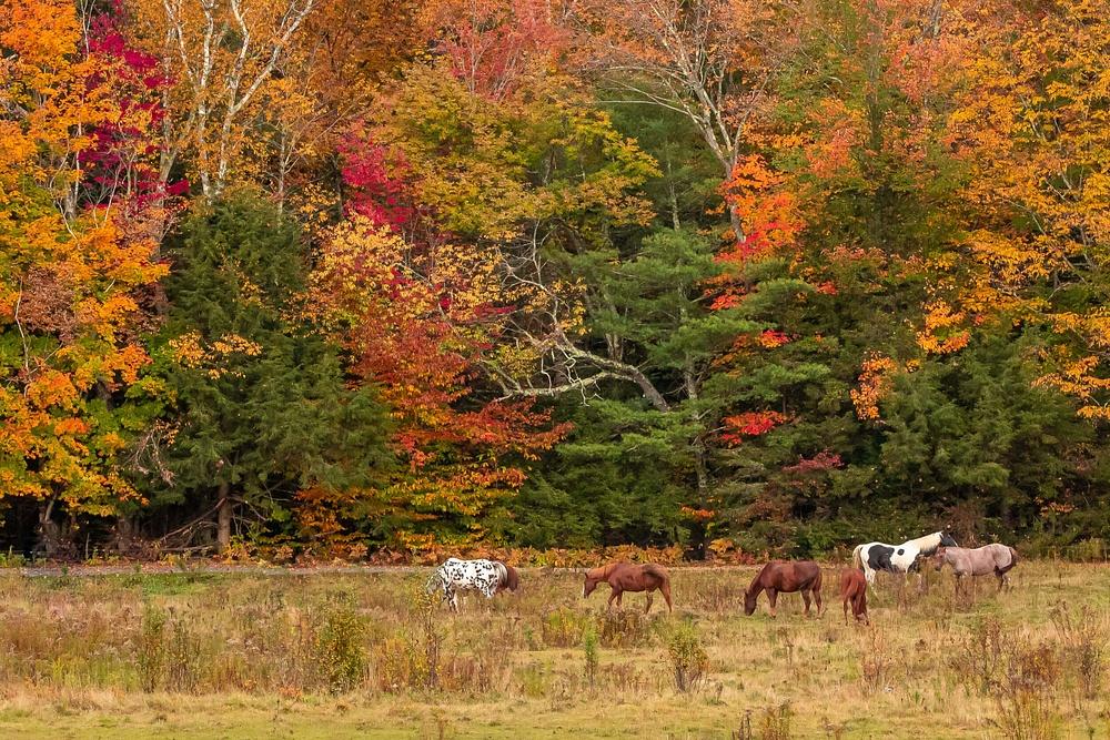Autumn Foliage Photographer