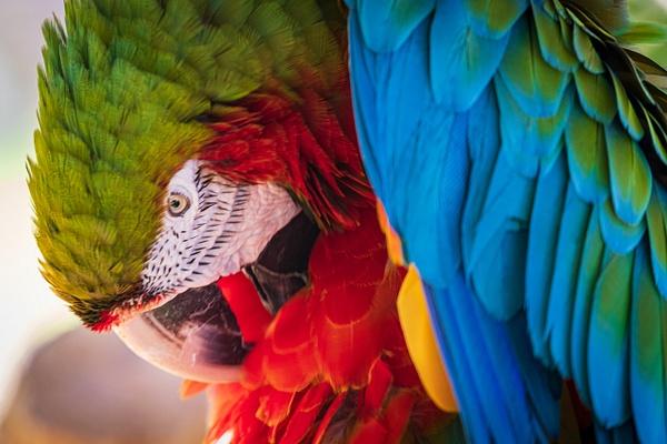 Parrot-1 - Wildlife Photography - John Dukes Photography