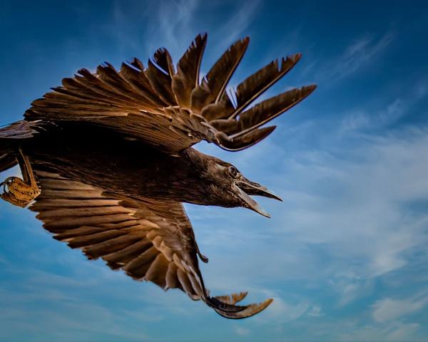 Death Valley-1 - Wildlife Photography - John Dukes Photography
