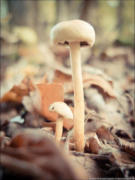 2012-10-21_164107_X10_2180 by PavelEremeev