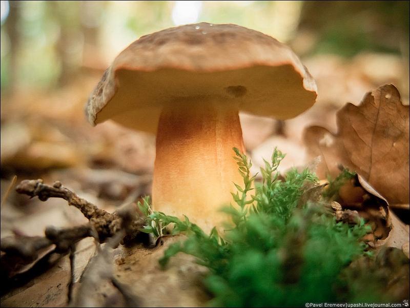 2012-10-21_162349_X10_2175