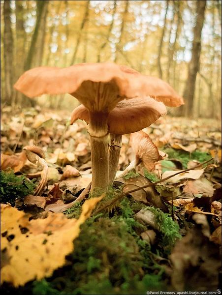 2012-10-21_154924_X10_2151 by PavelEremeev