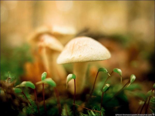 2012-10-21_152219_X10_2141 by PavelEremeev