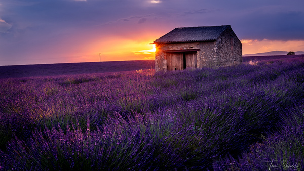 Lavender 2984 16x9 1920px sig - Landscapes - Tim Shields Landscape Photography
