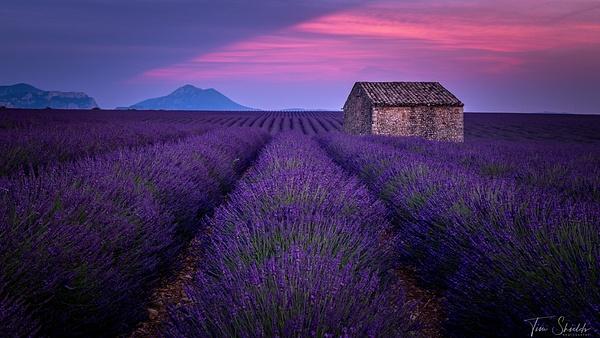 Lavender 3026 16x9 1920px_ - Landscapes - Tim Shields Landscape Photography