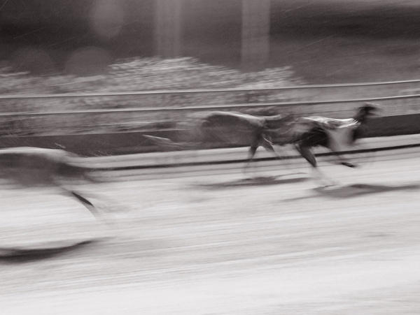 Greyhound Racing by User260197 by User260197