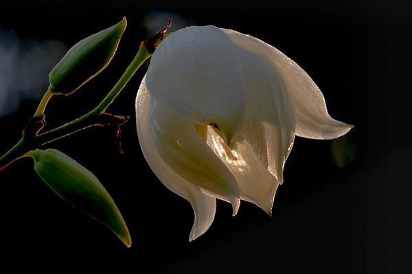 Silence_tash - Flowers - MJ Tash Photography